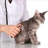 Ветеринарные клиники в Муезерском